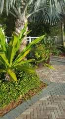 Harborside garden
